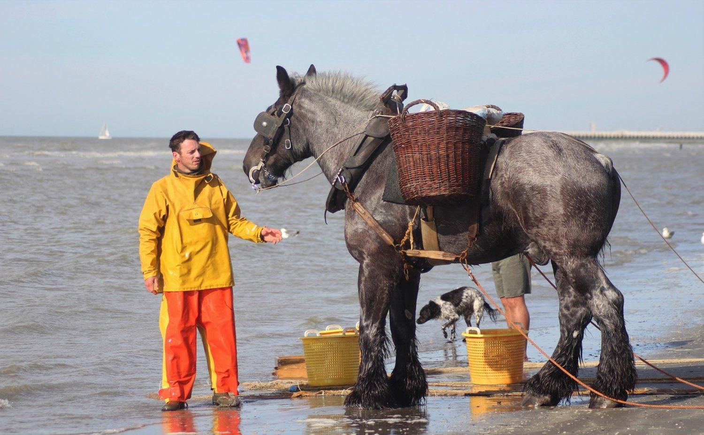 vlaamsejeugdherbergen-oostduinkerke-paardenvisser