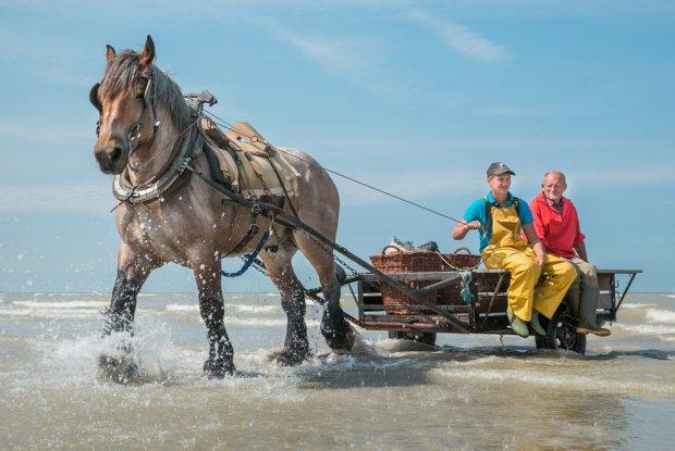 Garnaalvissers te paard in Oostduinkerke
